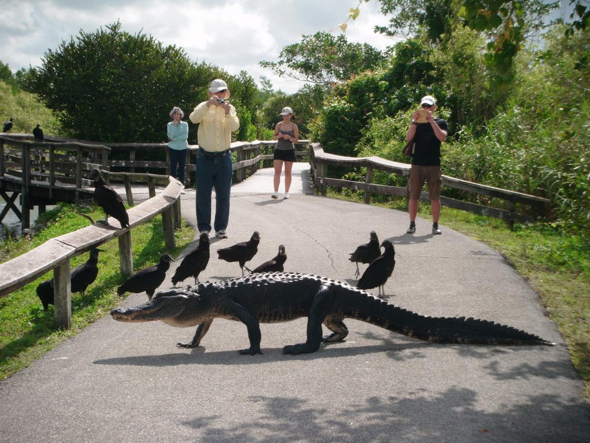 Everglades National Park tourism Florida